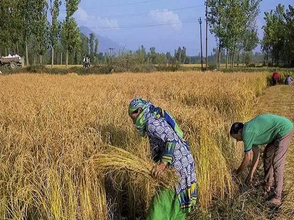PunjabKesari, Agriculture Bill, Agriculture Ordinance Bill, Anti Farmer Bill, Congress, BJP, Kamal Nath, Shivraj Singh Chauhan, Chhindwara, Madhya Pradesh