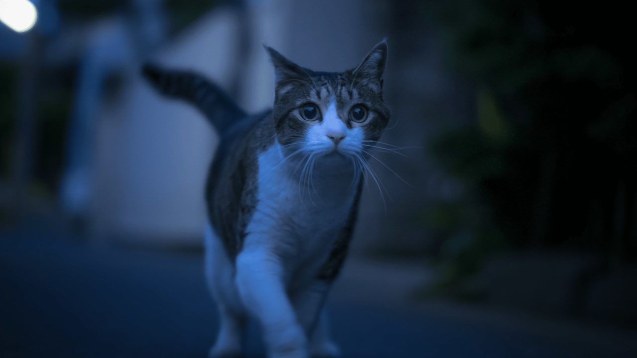 PunjabKesari, बिल्ली, Cat