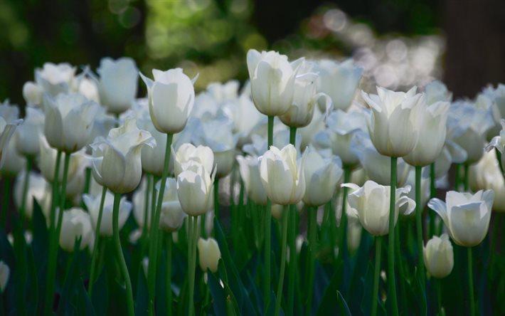 PunjabKesari, सफ़ेद फूल, White Flowers