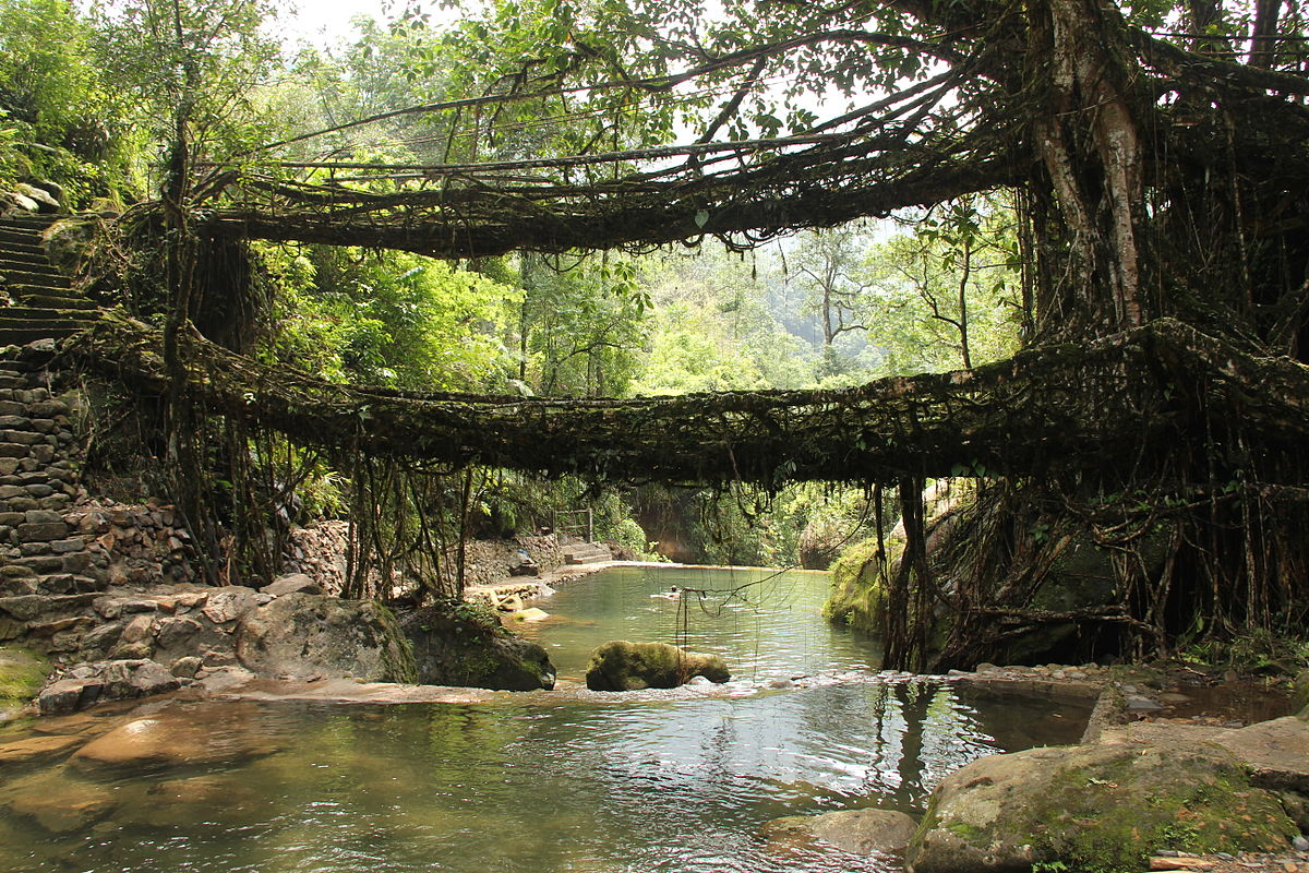 PunjabKesari, Nari, Living root bridges, Travel Place Image