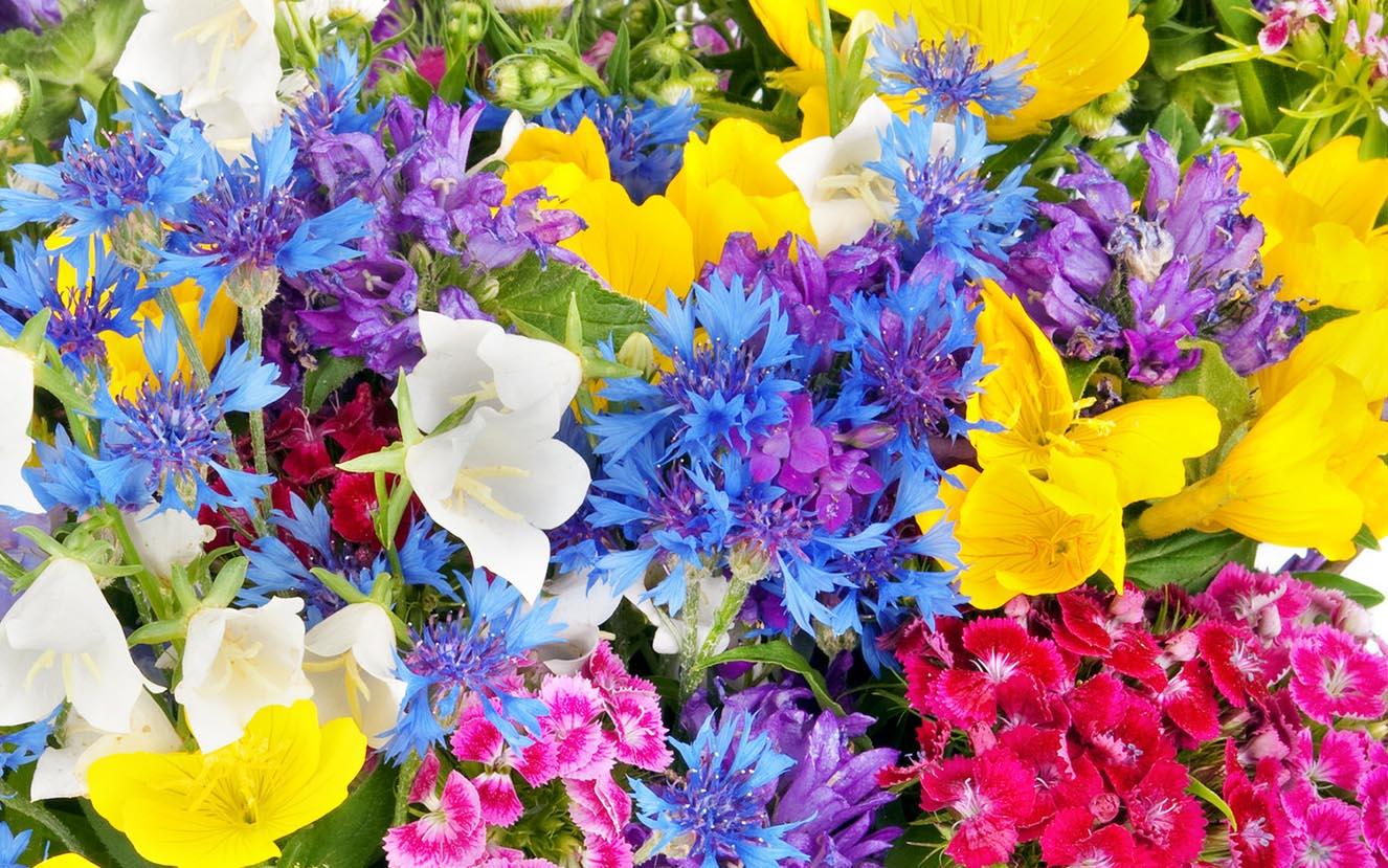 PunjabKesari, kundli tv, flowers image