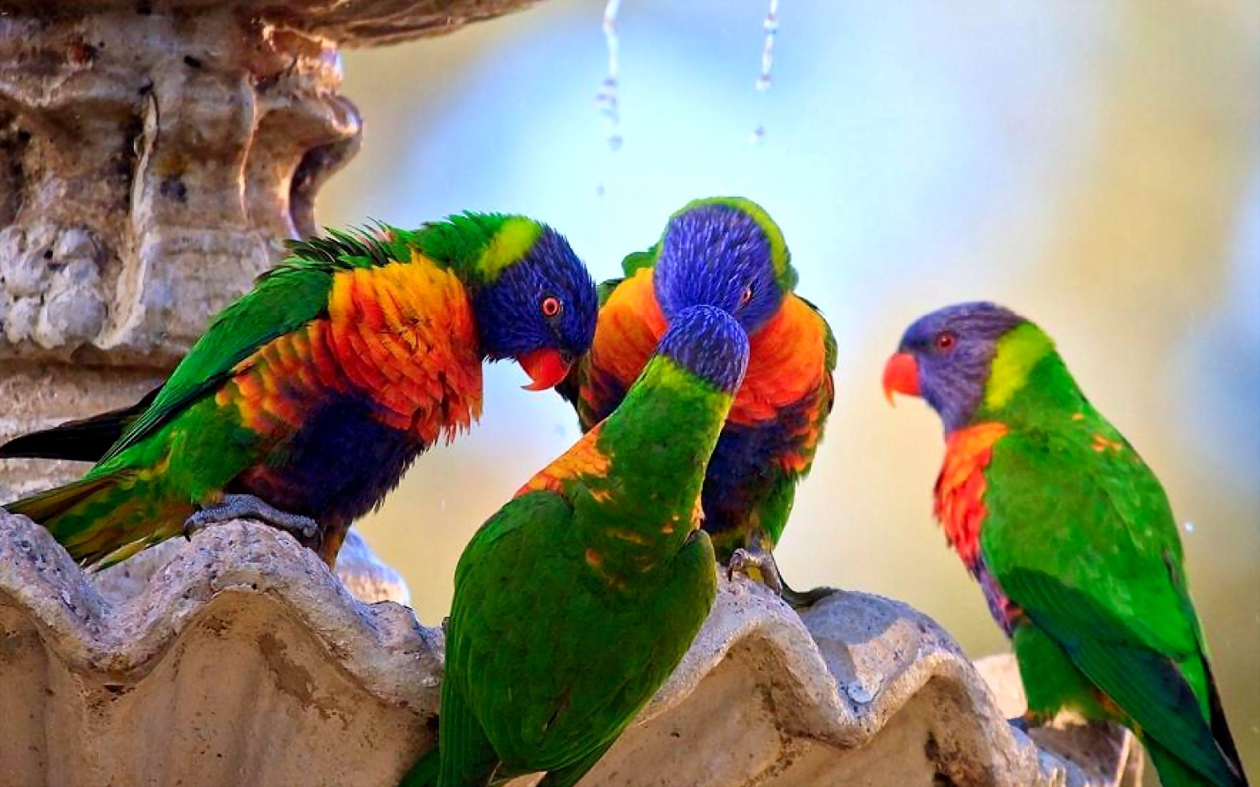 Image result for पशु-पक्षियों के साथ हनुमानजी