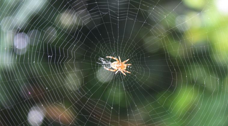 PunjabKesari, kundli tv, spider image