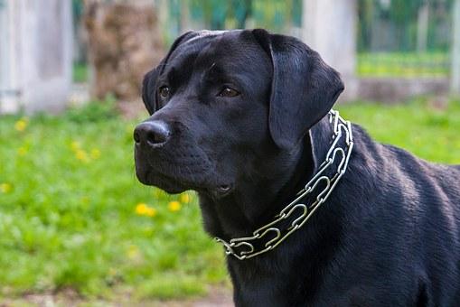 PunjabKesari, Dog, Dog Image, कुत्ता