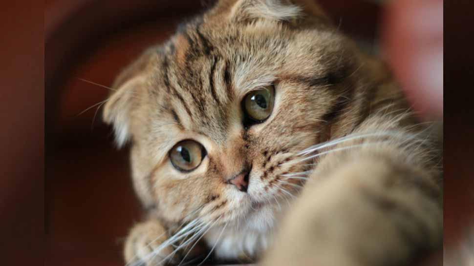 PunjabKesari, Cat, Cat Image, बिल्ली