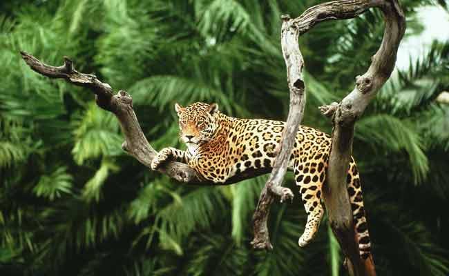 PunjabKesari, Sunbeda's Wildlife Century