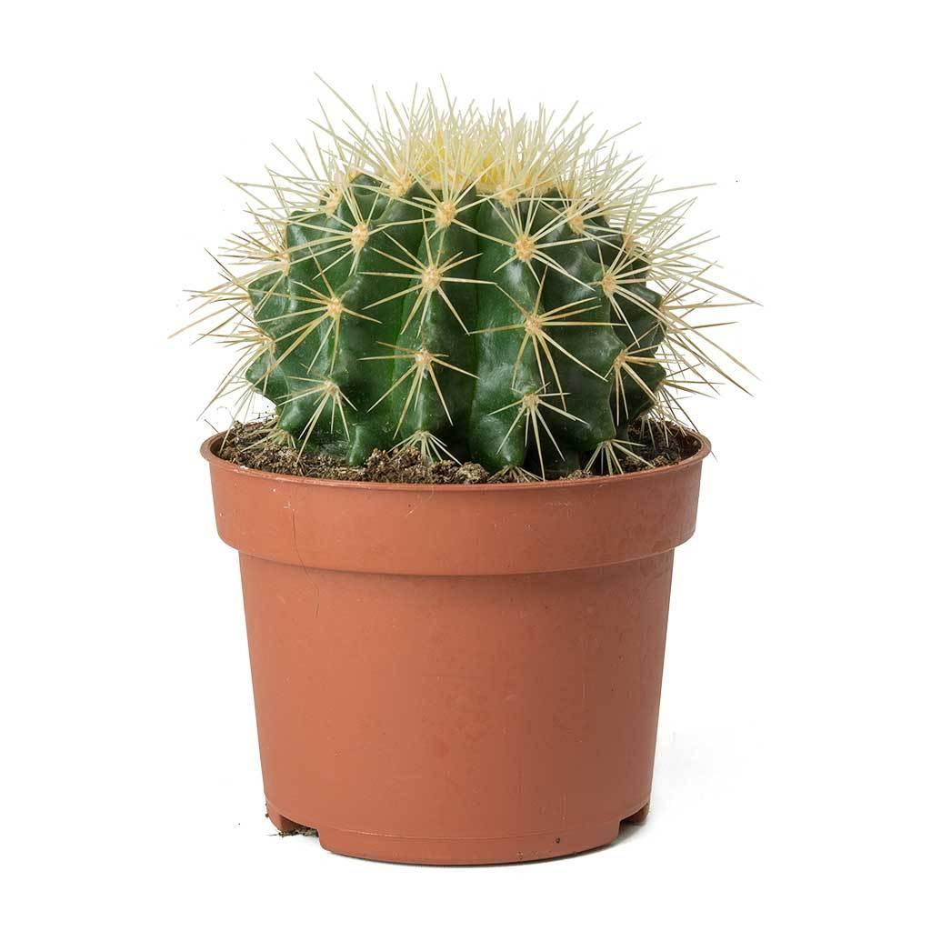 PunjabKesari, kundli tv, cactus image