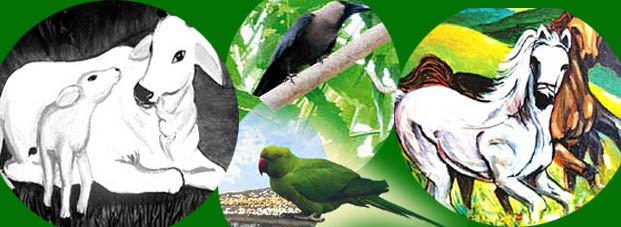 PunjabKesari Connection of birds and animals with future