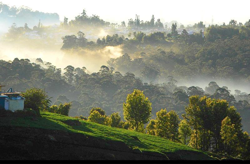 PunjabKesari, Nari, नीलगिरी, तमिलनाडु