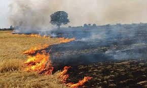 government succeeds 41 percent reduction in stubble burning