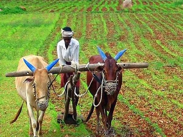 PunjabKesari, Madhya Pradesh, Indore, Bhopal, Congress, Farmer, Help Line Number, COngress Ka hath Kisano Ke sath