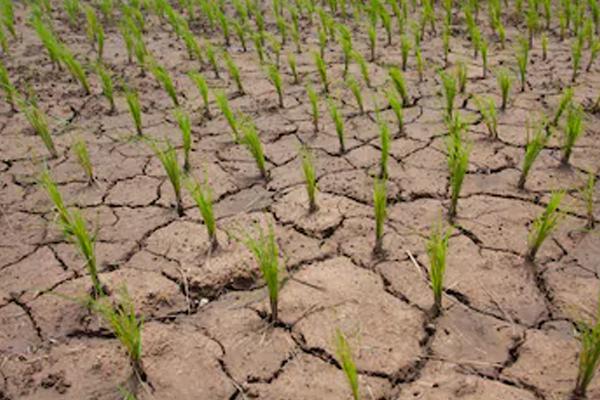 PunjabKesari, Suicide cases of farmers are increasing in agrarian state of Punjab