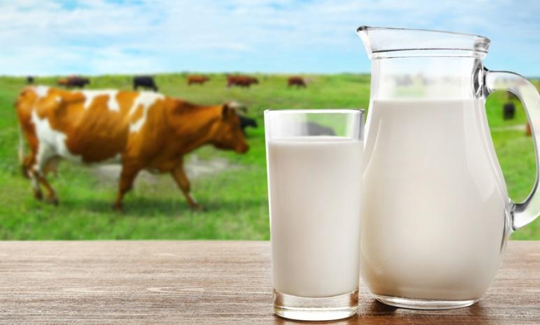 PunjabKesari,nari, Cow Milk