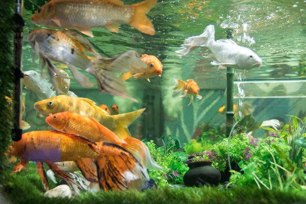 PunjabKesari, kundli tv, Fish Aquarium image