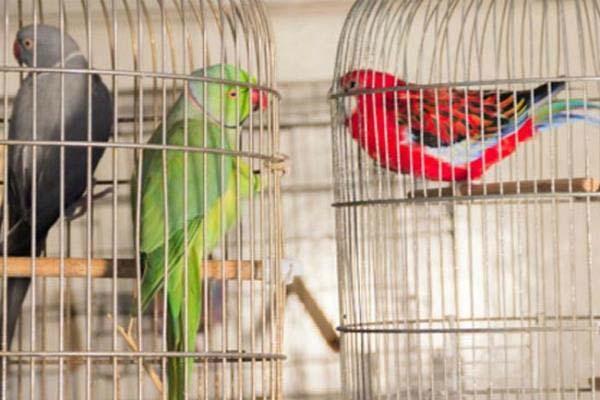 PunjabKesari, birds sold for Rs 600 after rigor