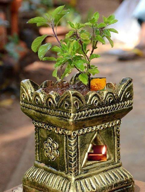 PunjabKesari, Tulsi, Tulsi Plant, Devi Tulsi, Tulsi Mata, Tulsi Worship, Tulsi Pujan, Shri Tulsi Ashtottar Shatnamavali, Mantra Bhajan Aarti, Vedic Mantra In hindi, Vedic Shalokas