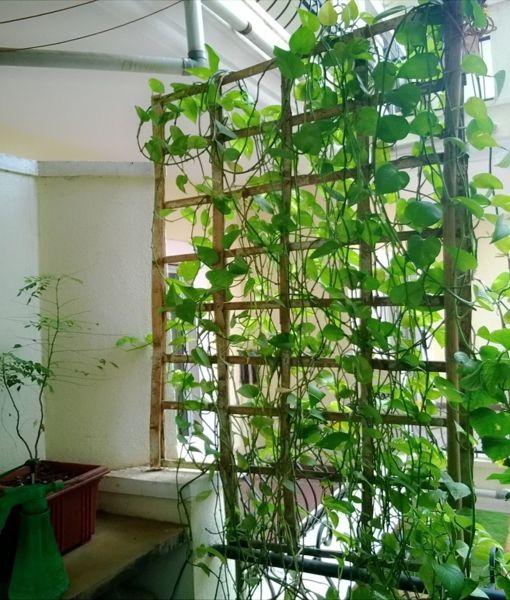 PunjabKesari, kundli tv, money plant image