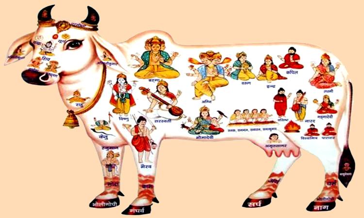 PunjabKesari Gau hatya in hindi