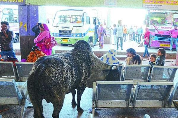 PunjabKesari, Madhya Pardesh Hindi News, sAGAR Hindi News, SAGAR Hindi Samachar, mAIN Bus Stand, Disorder