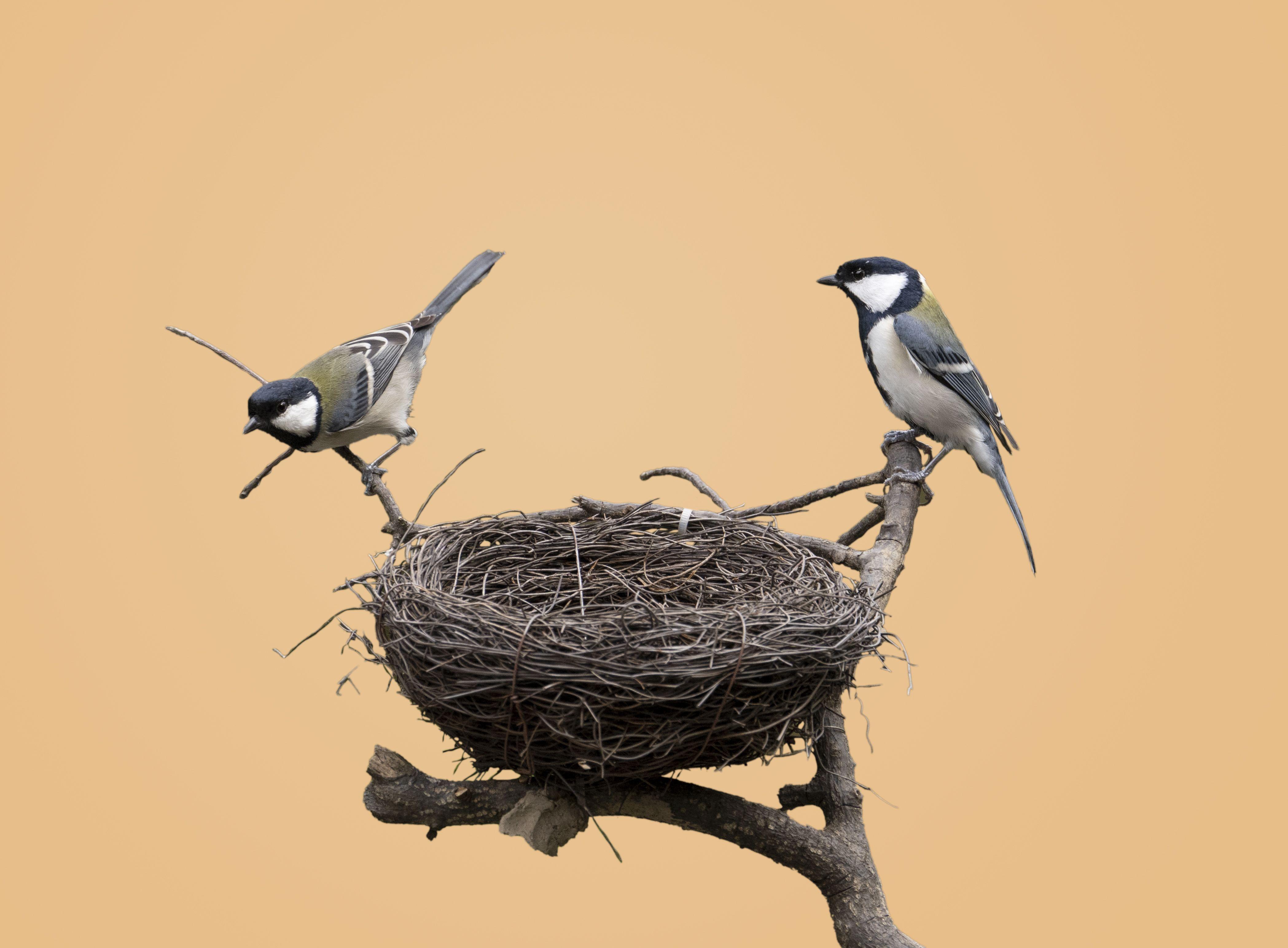 PunjabKesari, nest, घोंसला