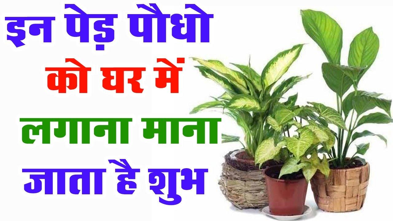 PunjabKesari Connection of trees and vastudosh
