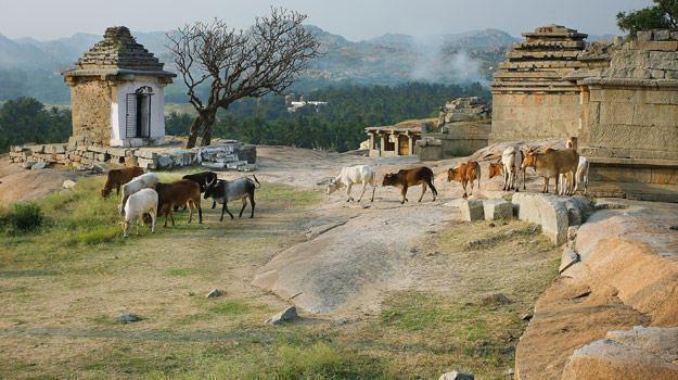 PunjabKesari, Nari