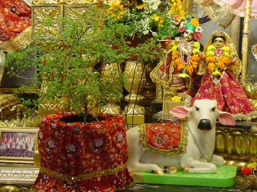 PunjabKesari, Tulsi Worship, Tulsi,Tulsi Mantra