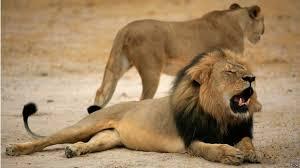 PunjabKesari, kundli tv, lion image