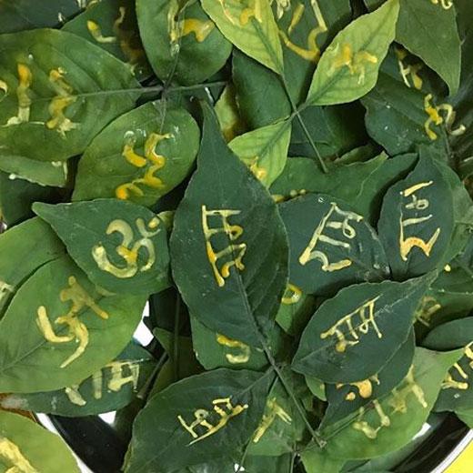 PunjabKesari, Bel Patra, Bilav Patra, बेल पत्र