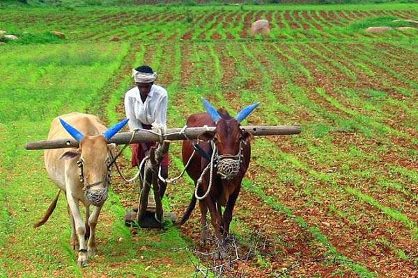 PunjabKesari, government, old pension, farmer, loan, guest teacher, Dushyant choutala
