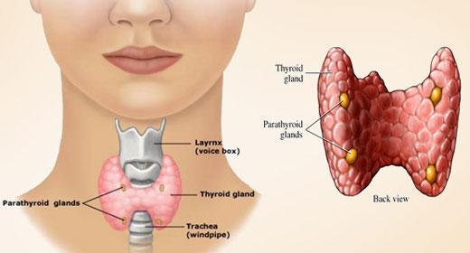 PunjabKesari,Thyroid Image, Thyroid problem In Women Image