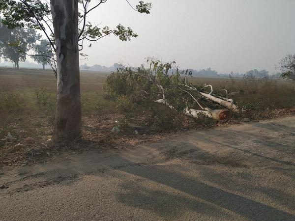 PunjabKesari, Green trees cut