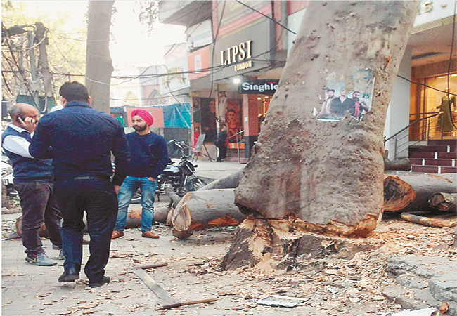 PunjabKesari, Corporation auctioned green tree