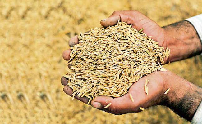 PunjabKesari, अनाज, Wheat
