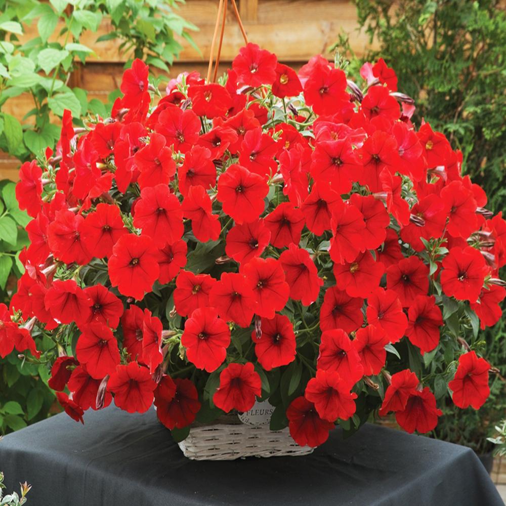 PunjabKesari, Red flowers image, Nari