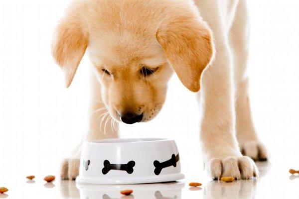 PunjabKesari, कुत्ता, Dog, Puppy