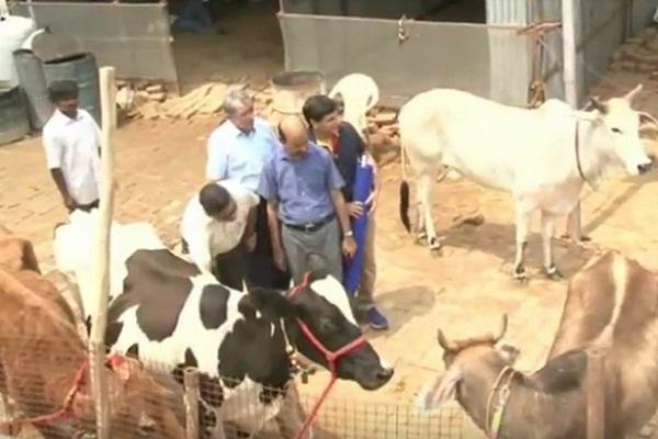 PunjabKesari, animal, hitack, court