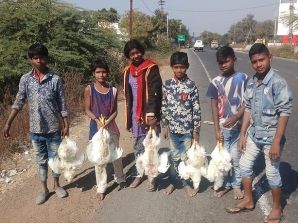 PunjabKesari, Madhya Pardesh Hindi News, Badwani Hindi News, Badwani Hindi Samachar, Poultry truck reflex