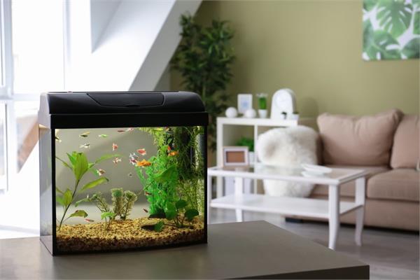 Aquarium से बदले घर की लुक, यहां से लें डैकोरेशन के आइडियाज