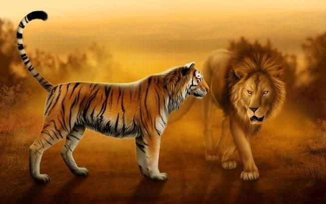 PunjabKesari, Lion, Tiger, शेर, बाघ
