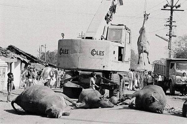 PunjabKesari भोपाल गैस कांड  Bhopal Gas tragedy