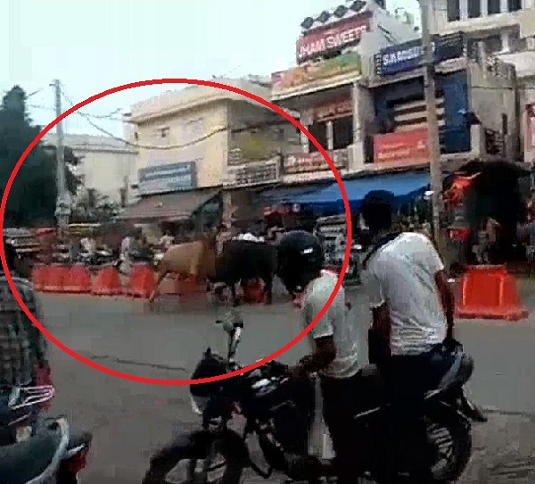 two bulls entered into a sweet shop near the old bus stand