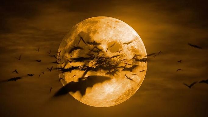 PunjabKesari, harvest moon