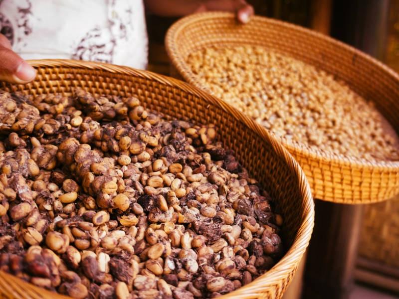 PunjabKesari, Kopi Luwak Coffee Image, Expensive Food Items Image, कोपी लुवाक कॉफी इमेज