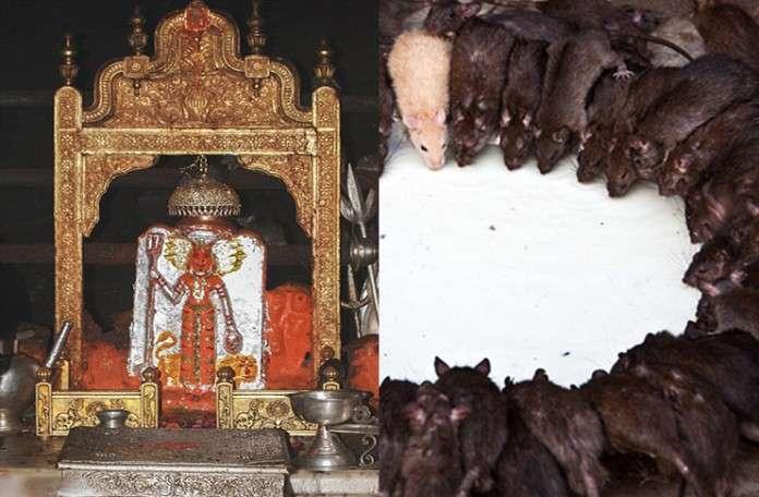 PunjabKesari, Karani Mata Temple