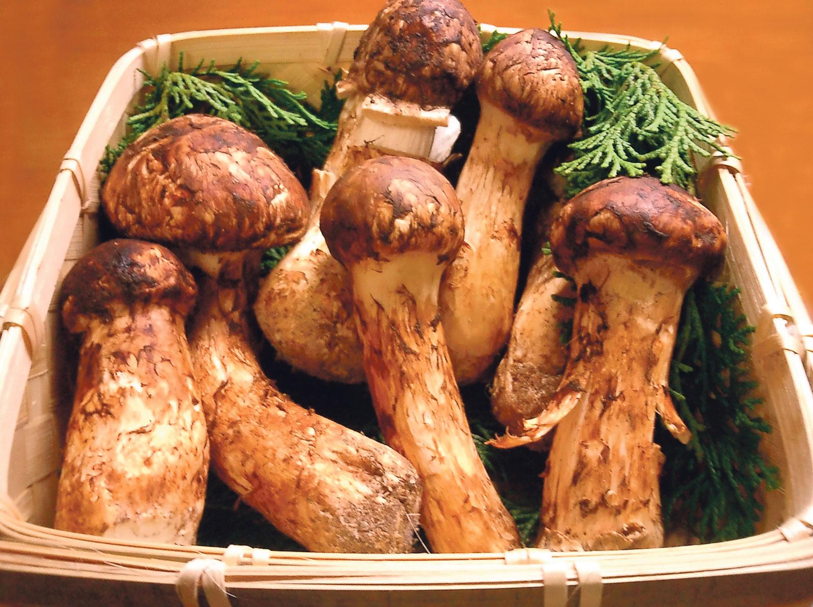PunjabKesari, Matsutake Mushrooms Image, Expensive Food Items Image, मैटसुटेक मशरूम इमेज