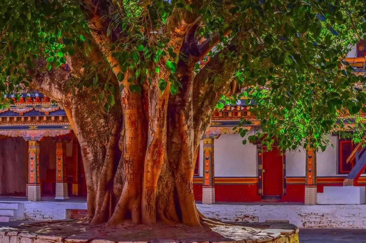 Dharam, pitru paksha, Trees worship in pitru paksha, Trees worship, Banyan tree