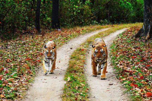 PunjabKesari, केवलादेव राष्ट्रीय उद्यान इमेज