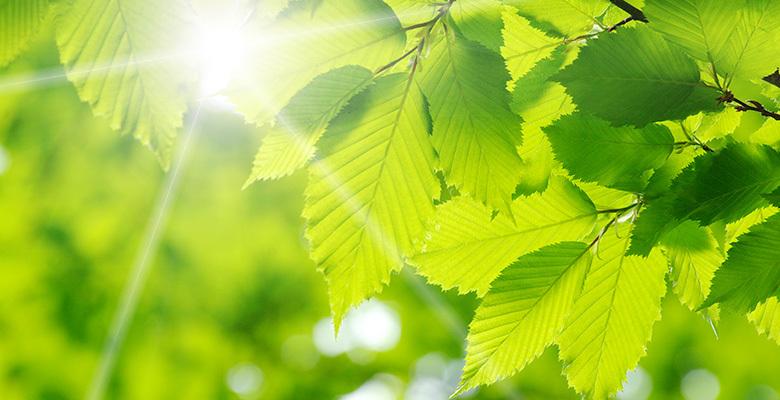 PunjabKesari, green, green colour