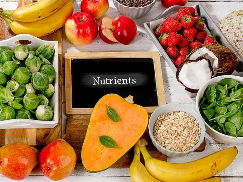 PunjabKesari, Nutrients Food Image, Reason of Dark Circles Image